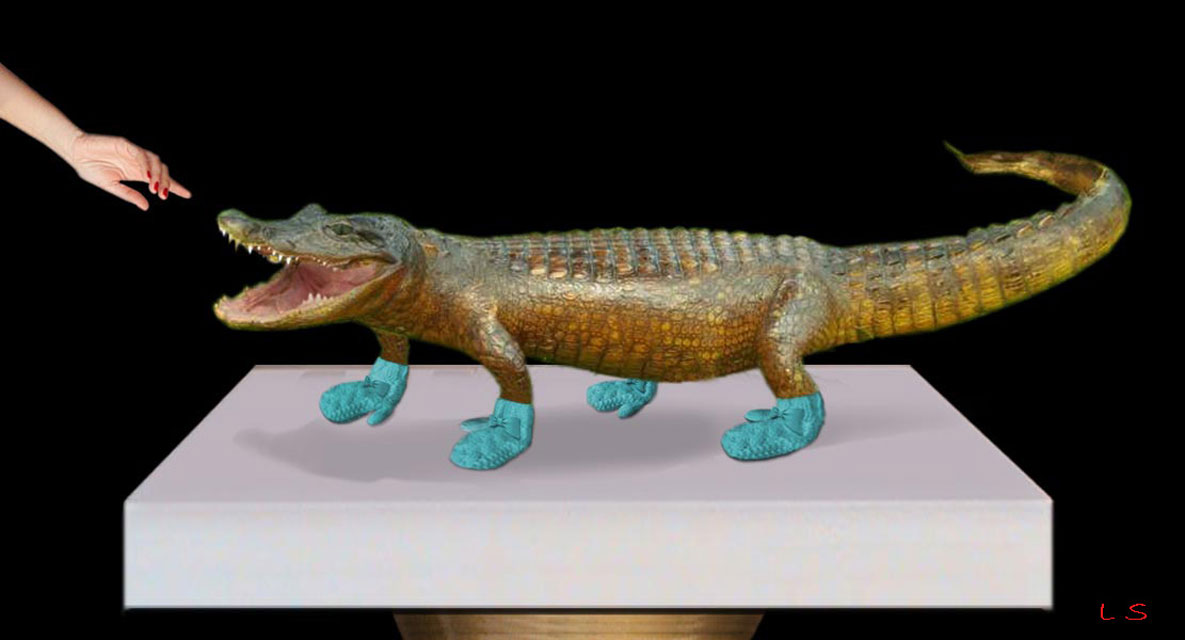 mittygator, an alligator wears mitty